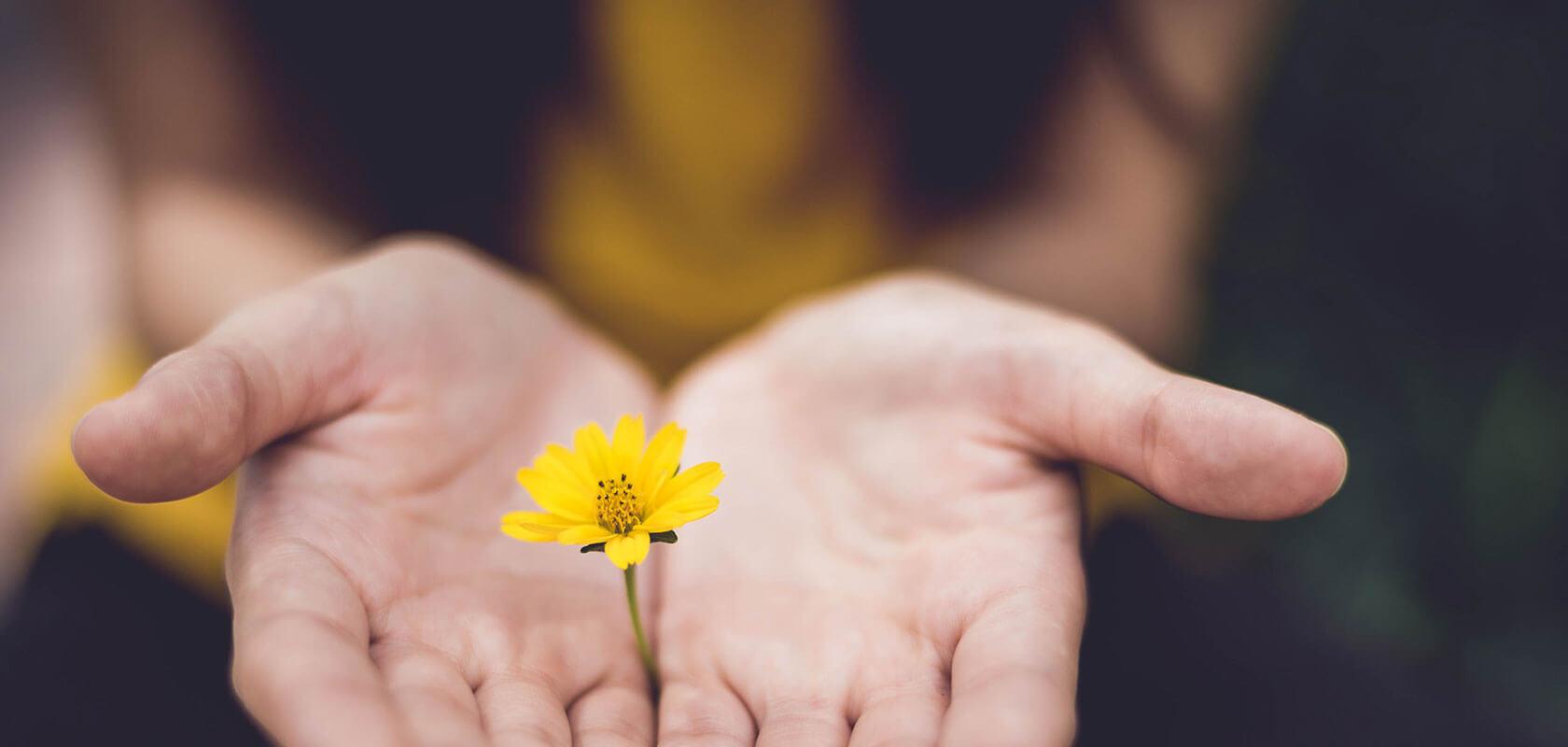 Mains ouvertes présentant une fleur jaune